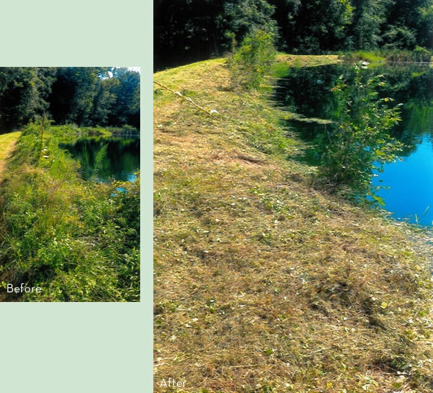 Clearing pond bank of weeds in Maryland